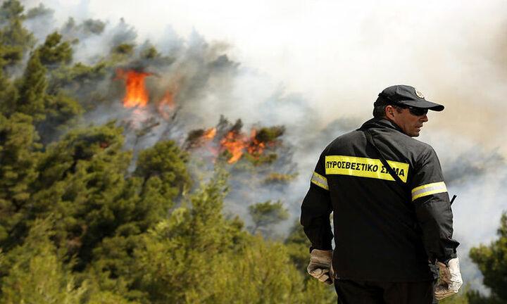 Πυρκαγιά σε δασική έκταση στη Λακκιά Θεσσαλονίκης