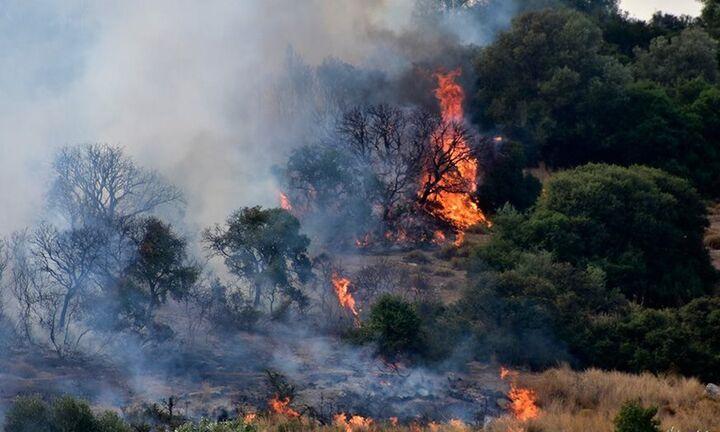 Πυρκαγιά σε δασική έκταση στην Εύβοια