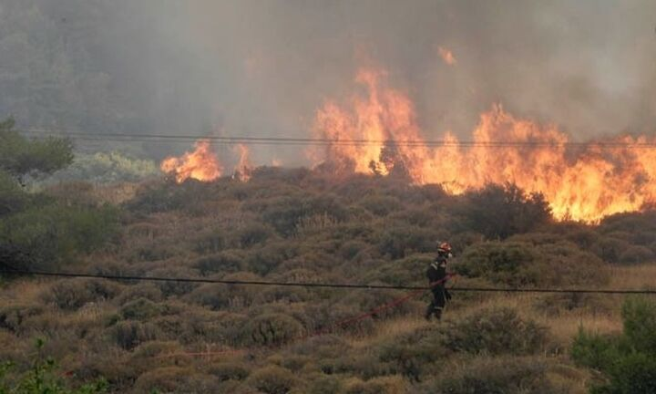Πύργος: Φωτιά καίει δασική έκταση στην περιοχή Κυανή Ακτή