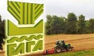 ΕΛΓΑ: Την Παρασκευή οι αποζημιώσεις 6 εκ. ευρώ σε 2.695 δικαιούχους αγρότες και κτηνοτρόφους