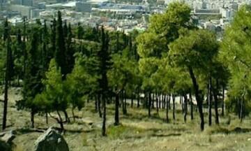 Θεσσαλονίκη: Απαγόρευση κυκλοφορίας το Σάββατο (03/07)στο Σέιχ Σου λόγω κινδύνου πυρκαγιάς