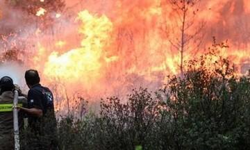 Υπό μερικό έλεγχο η πυρκαγιά στην Ύδρα - Βελτιώθηκε η κατάσταση στη Χίο