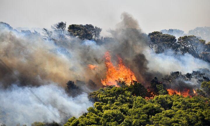 Πυρκαγιά σε δασική έκταση στους Βουρλιώτες Σάμου