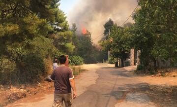 Έκτακτη ενημέρωση Χαρδαλιά: «Καθαρός εμπρησμός» η φωτιά στη Σταμάτα - Τέσσερις προσαγωγές (vid)
