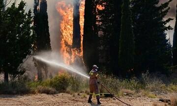 Νέα πυρκαγιά στην Αχαΐα - Εκκενώνονται επιχειρήσεις και κατοικίες λόγω πυρκαγιάς στον Προφήτη Ηλία