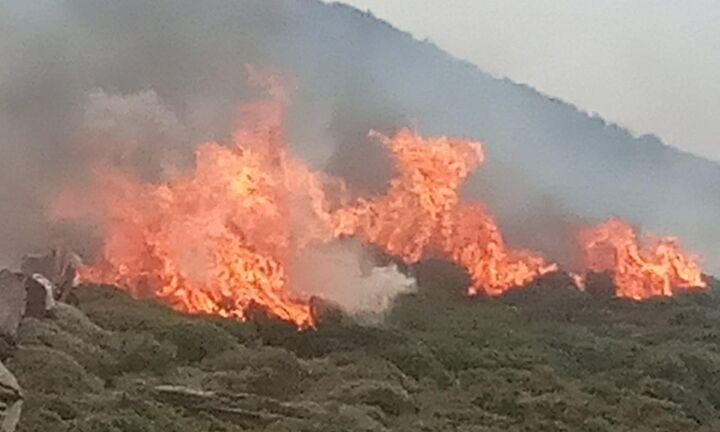 Αιτωλοακαρνανία: Πυρκαγιά σε δασική έκταση στην περιοχή Θυρίου