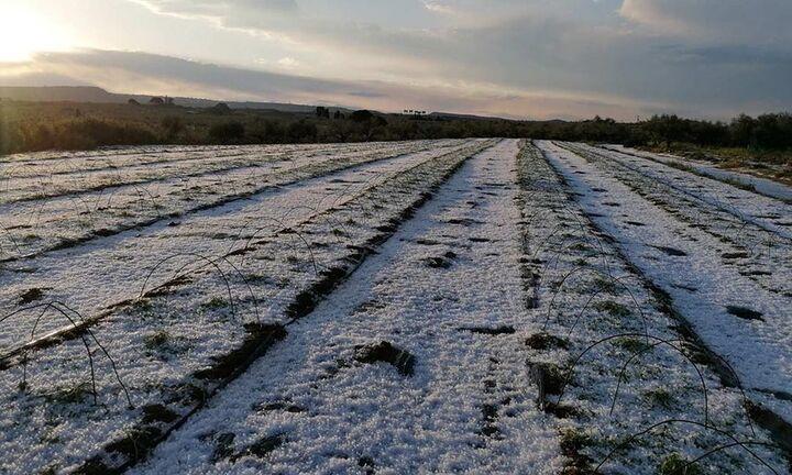 Οικονόμου: Μέχρι Σεπτέμβριο οι αποζημιώσεις για τον παγετό
