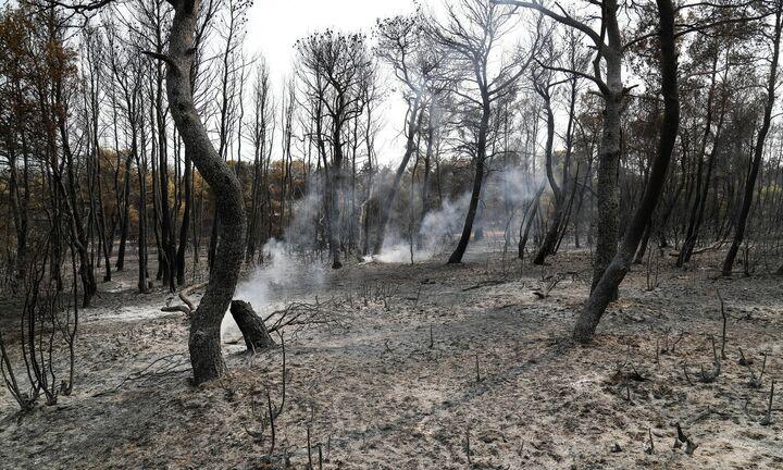 Ο πρώτος τραγικός απολογισμός: Πάνω από 600.000 στρέμματα καμένης γης