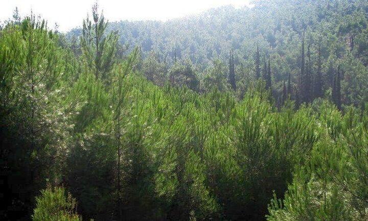 Παρατείνεται έως την Παρασκευή η απαγόρευση μετακίνησης σε δάση, εθνικούς δρυμούς,περιοχές Natura