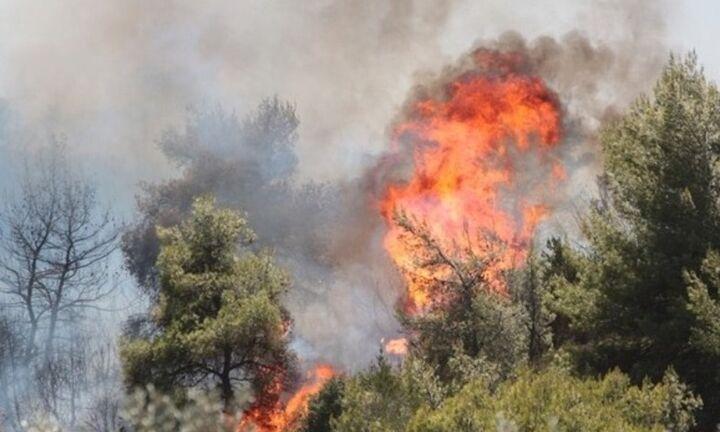 Σε εξέλιξη η φωτιά στην Ανατολική Μάνη της Λακωνίας