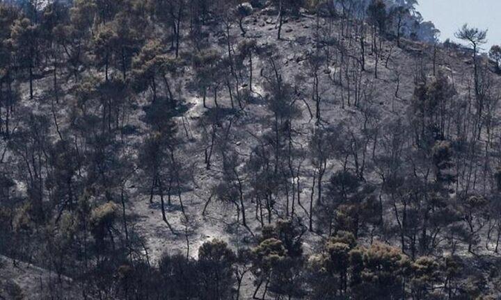 Περισσότερα από 650.000 στρέμματα οι καμένες εκτάσεις σε Εύβοια, Αττική, Λακωνία