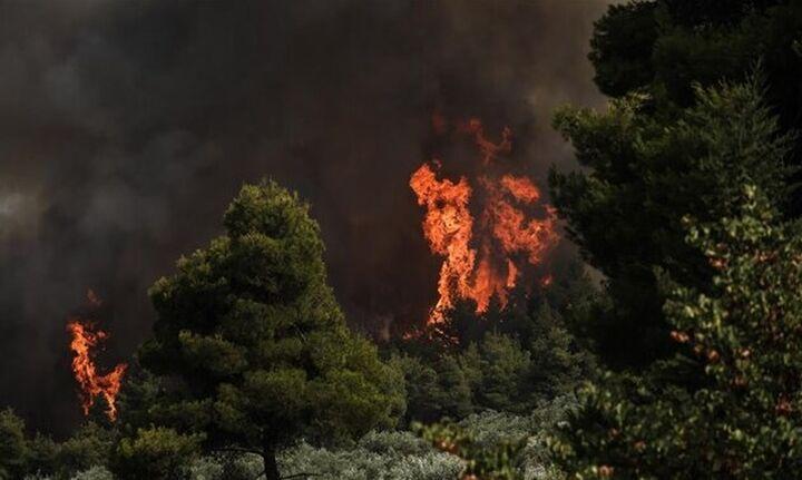 Φωτιά στην Εύβοια: «Η Εύβοια κάηκε επίτηδες» – Τι καταγγέλλει ο Πρόεδρος Κοινότητας Ροβιών