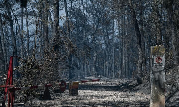 ΥΠΕN: Σε τρεις άξονες τα μέτρα και οι παρεμβάσεις στις πυρόπληκτες περιοχές