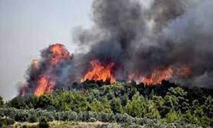 Φωτιά στην Ανατολική Μάνη: Σε Δεσφίνα, Σκαμνάκι και Μονή Τσίγκου τα μέτωπα