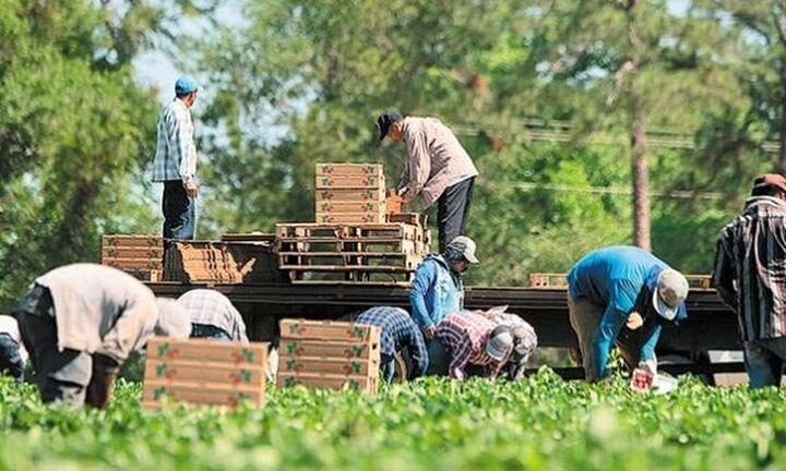 Παράταση προσωρινής απασχόλησης εργατών γης για επιπλέον 90 ημέρες