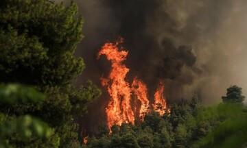 Νέες πυρκαγιές σε Χαλκιδική και Μάνδρα