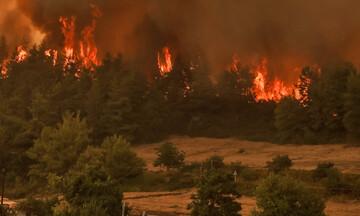 Κομοτηνή: Πάνω από 100 στρέμματα δασικής έκτασης έκαψε η πυρκαγιά στη Νυμφαία