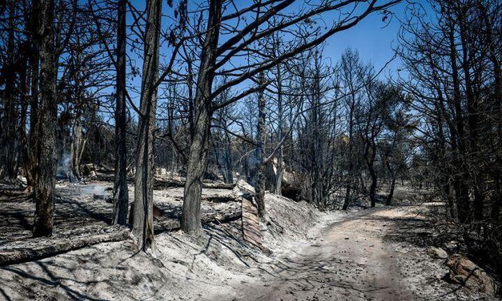 Ιταλία: Οι μεγαλύτερες καταστροφές από τις δασικές πυρκαγιές το 2021 στην Ευρώπη