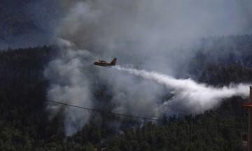 Πυρκαγιά στα Βίλια - Μάχη με τις αναζωπυρώσεις - Πάνω από 20 χλμ το πύρινο μέτωπο