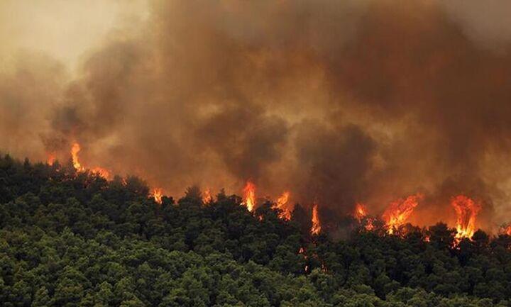 Πυρκαγιά στα Βίλια: Συνεχίζεται για πέμπτη ημέρα η μάχη με τις φλόγες