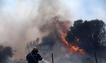 Εμπρησμός η πυρκαγιά στο Δασκαλειό - Βρέθηκαν υπολείμματα φωτοβολίδας