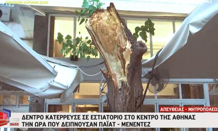 Απίστευτο περιστατικό: Δέντρο κατέρρευσε στο εστιατόριο που δειπνούσαν Τζέφρι Πάιατ - Μπομπ Μενέντεζ
