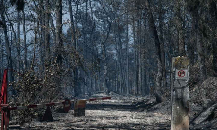 Αποκαρδιωτικά στοιχεία: Οι πυρκαγιές έκαψαν το 1/6 των δασών της Αττικής