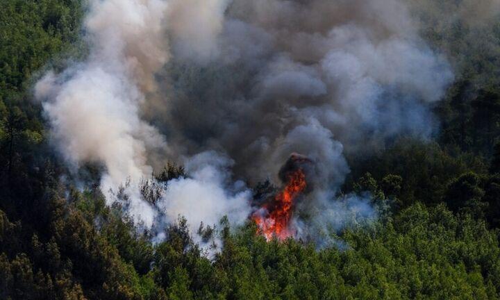 Φωτιά στο Αγιον Ορος στην περιοχή της Αγίας Άννας