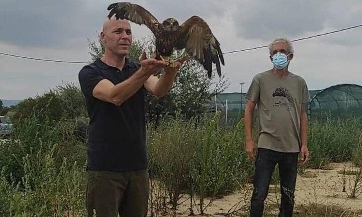 Προοπτική δημιουργίας Νοσοκομείου Περίθαλψης Άγριας Ζωής στη Θεσσαλονiκη