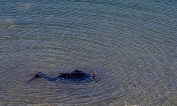 Βόλος: Συνελήφθη ο ασυνείδητος ψαράς που βρήκε τον νεκρό ψαροντουφεκά και τον έριξε ξανά στη θάλασσα