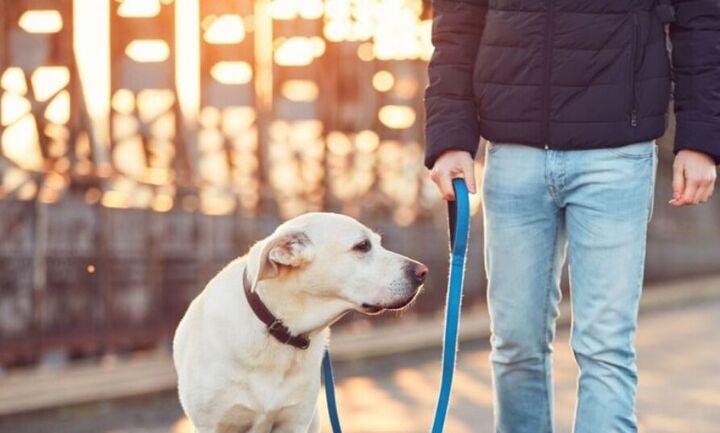 Βουλή: Ψηφίστηκε επί της αρχής το ν/σ για τα ζώα συντροφιάς