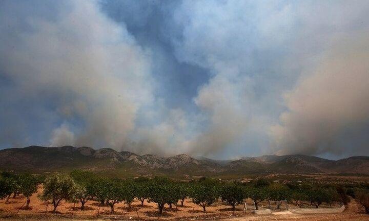 Πυρκαγιά σε δασική έκταση στην Κακιά Θάλασσα Κερατέας