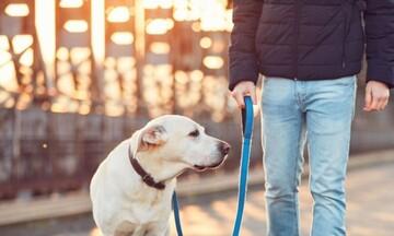 Στ. Πέτσας: Βελτιώσεις στο νομοσχέδιο για τα ζώα συντροφιάς