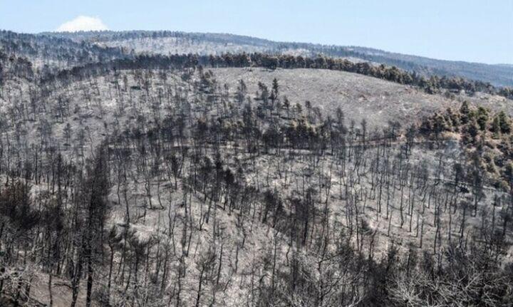 Η ΔΕΗ Ανάδοχος Αποκατάστασης στην Βόρεια Εύβοιαμε απόφαση του ΥΠΕΝ