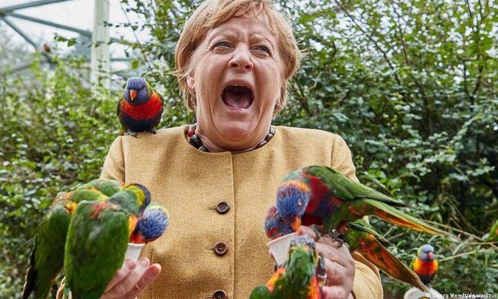 Γερμανία: Παπαγάλος πήρε εκδίκηση... για όσους αντιπαθούν την Άνγκελα Μέρκελ (vid)