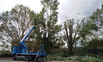 ΥΠΕΝ: Απλοποιείται η διαδικασία για κοπή δέντρων σε ιδιωτικές εκτάσεις, εκτός ορίων οικισμού