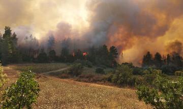 Πυρκαγιά σε δασική έκταση στην Μάνη